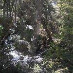 Cascada Irigoyen desde el camino