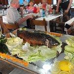 special fish dish...