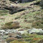 Links im Bild, farblich gut getarnt, ein junger Steinbock.