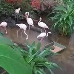 Flamingosi koji se gaje u samom hangaru gde se nalazi aqua park.