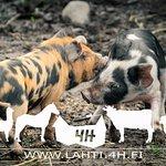 Yli-Marola 4H City Farm
