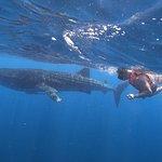 Whale Shark.!