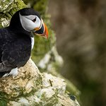Puffins can be seen from Spring to about mid July