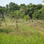 Wilds of Cambodia - Chi Phat Loop single track ride