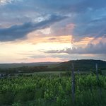 Sunset wine tour in the vineyard