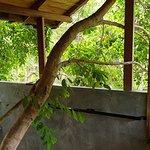 Amba Sewana Resort-billede