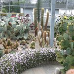 Inside the cactus house