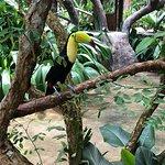 Club Rio wildlife reserve tour