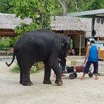 Foto de Elephant Retirement Park Phuket