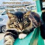 Mellow meow, Pet-friendly good seafood Pier99 restaurant resident fur-fellow.