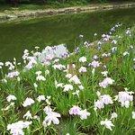 池の周りには菖蒲の花が咲いている。