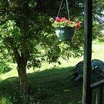 Cabin greenery