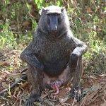 SUR LA ROUTE DU LAKE ALBERT Sur la route de l'Ouganda profond entre le Murchison National Park et le parc Queen Elisabeth n'hésitez pas à faire une halte sur le Lac Albert , pour apprécier les pêcheurs de nuit ! https://youtu.be/U-0wR38x-1o VOTRE PROGRAMME PERSONNALISE  DE VISITE  DE L'OUGANDA SUR DEMANDE AUTOURDUMONDE2023@GMAIL.COM  LES COORDONNES DE NOTRE CHAUFFEUR GUIDE PAUL  SUR DEMANDE SUIVEZ NOUS SUR FACEBOOK @PHILVERH https://www.facebook.com/philverh/?modal=admin_todo_tour