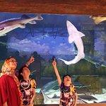 תמונה מFuntastic Aquariums