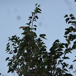 Shy local Hornbill bird in tree at Damara Mopane Lodge