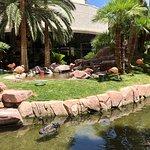 Flamingo Wildlife Habitat Resmi