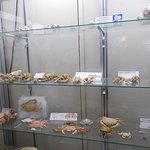 Crabs in their dried forms