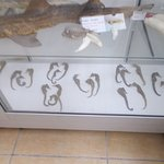 Some seahorses on display