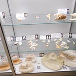 Some bigger shells on display