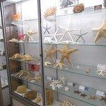 Some starfish on display