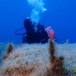 Sea World Diving Center Kos