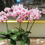 Beautiful orchids growing in the hotel