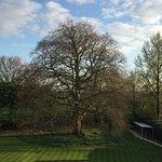 Babington House: Fabulous statuesque tree as seen from my room