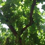 Page Spring Cellars Winery & Vineyards resmi