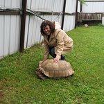 Nice tortoise.