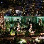 Фотография Flower Dome