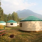 Five heated yurts available year around.