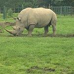 The resident Rhino