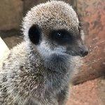 Get up close to Meerkats