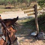 Olympus Horse Riding Club