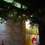 Mango Tree照片
