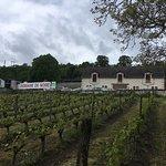 Domaine de Noire vineyard & winery in the Chinon region