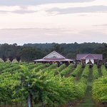 June is a beautiful time to visit the Winery