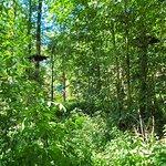 Fotografia de Fun Forest Venlo