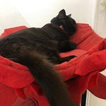 Lady Dinah's Cat Emporium照片
