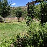 White wine flight & vineyards
