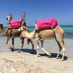 תמונה מCaribbean World Thalasso Djerba