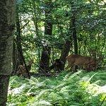 wildlife on the hike