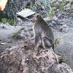 Mount Batur Resmi
