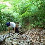 山道の様子。まだ初期段階でこの険しさです。鎖でなく木の根をつかんでますね。