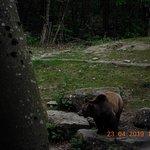 Tutta la sua naturalezza questo Orso girava maestoso,bello naturalmente cercava anche da mangiare