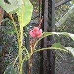 Растения внутри помещения