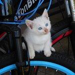 先日生まれた子猫