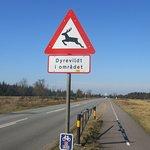 """Indgangen"" til Danmarks største krondyrs-reservat."