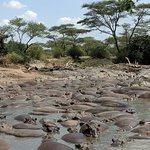 hippo pool in Serengeti, smelly but a cool sight!