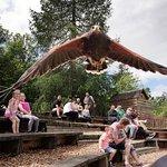 תמונה מBlair Drummond Safari and Adventure Park